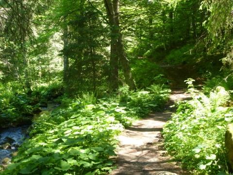 Naturerfahrung mit allen Sinnen - Spaziergang4