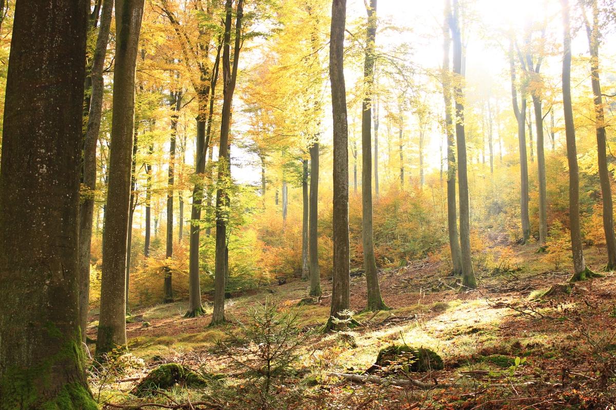 Lehrgang Natur-Coaching ... für Wanderführer