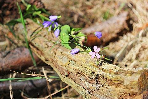 Workshop Natur-Fotografie in Wald und Feld-2-21