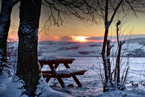 Waldbaden – spür die Stille im Advent